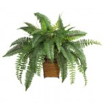 boston fern 150x150 Which plants are safe (and not safe) for cats?