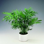 good luck palm1 150x150 Which plants are safe (and not safe) for cats?