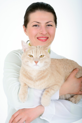 doctor cat Vets who really know and love cats: a list