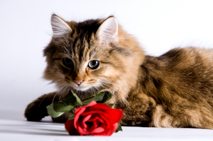 flowers for cat lovers finally some cat safe choices