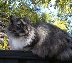 <em>Featured Soul Cat:</em> Momo the Blogging Cat