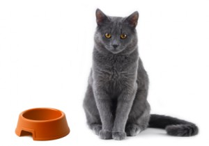iStock 000005392034XSmall 300x210 No more cat hunger strikes: Life saving tips for introducing new foods