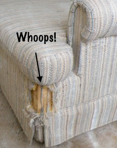couch whoops 237x300 How to keep cats from scratching furniture? Smart behaviorists have answers
