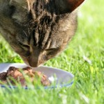 Scratching your head in the cat food aisle? I've been there.