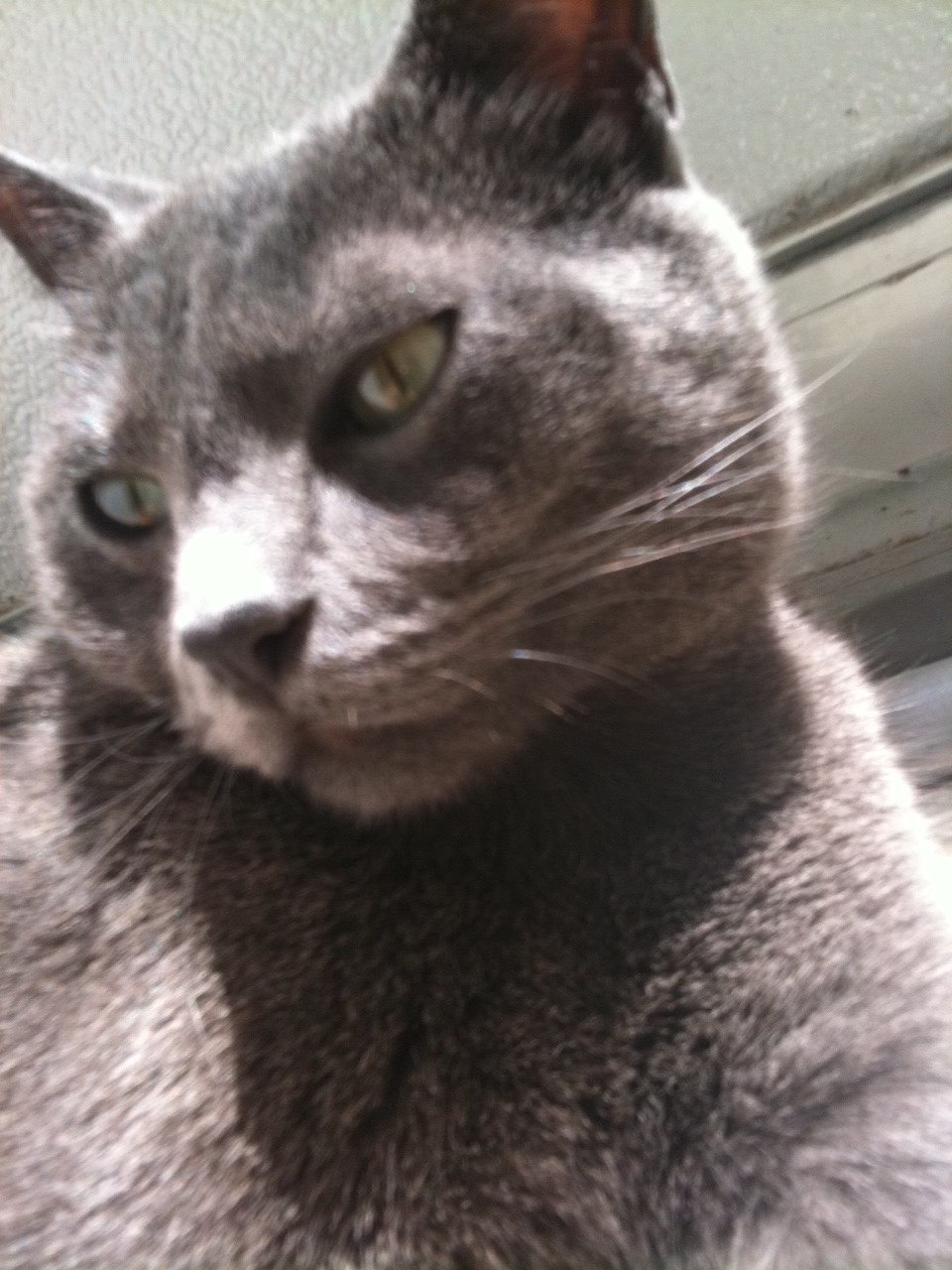 Conjunctivitis in a cat: home treatment 62