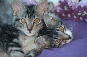 xylo and tanagra 300x199 Cat healing story: acupressure and a rescue kitten