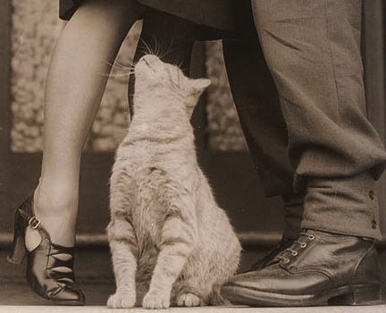 1940cropped When cat loves a human (Valentines Day stories)
