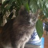 """Karil's cat Boomer - """"well worth the effort!"""""""