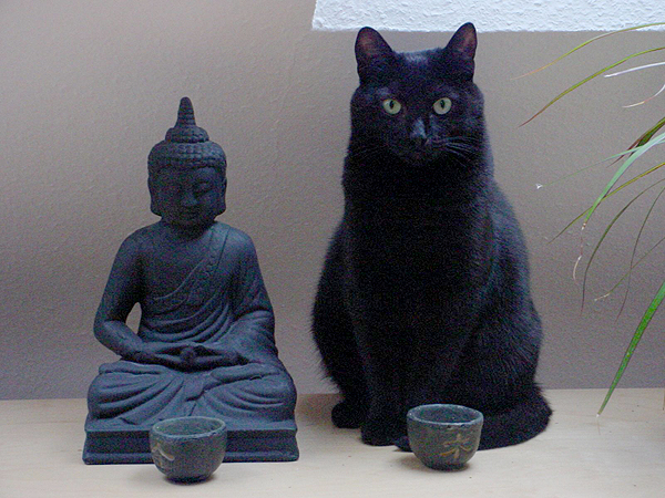 pet itate tips for meditating with your cat natural cat care blog