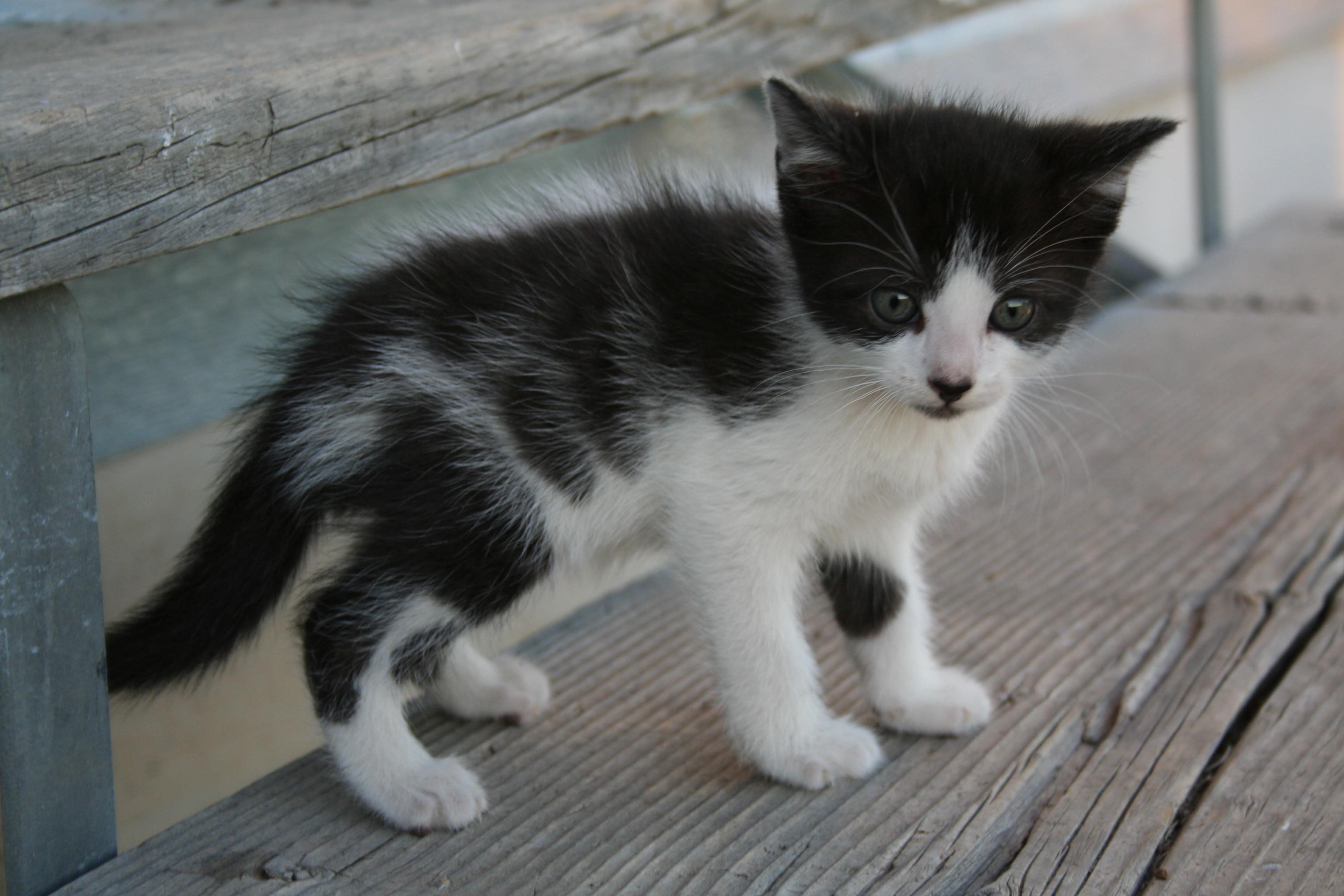 protect your kitten from these 4 common household risks natural