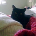 The beautiful black Willikins is a lively, loving soul cat to Maree-Louise Quay. They have a mysterious understanding of each other that you may relate to. I love how she describes the first time they met.