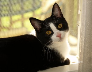 """What are a couple good things readers should try at home for the """"outside the litter box"""" problem? """"Assuming there's no medical issue, anyone experiencing a litterbox problem with their cat should take a good, long look at..."""