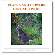 Cat Safe Plants Download Natural Cat Care Blog