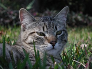What To Feed Cats With Feline Ibs Diarrhea Or Frequent