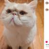 oscar instagram